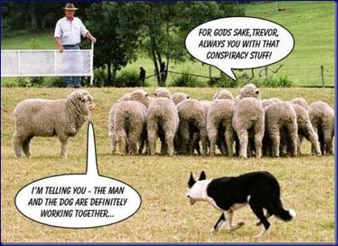 Border Collie Conspiracy